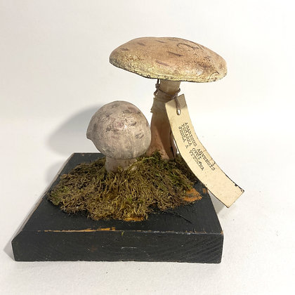 Mushroom Teaching Model