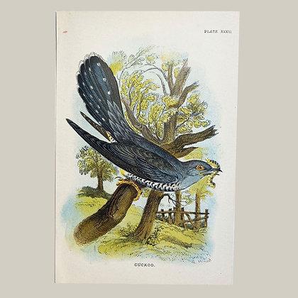 Cuckoo, Small Plate Print -1893
