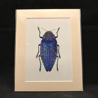 Polybothrissumptuosa gema - Real Macro Photograph of Insect #6