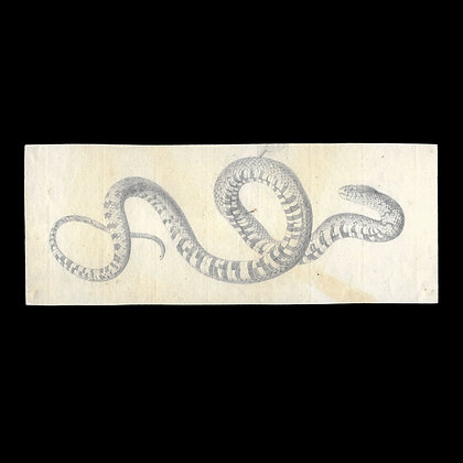 Original Pencil Drawing of a Snake
