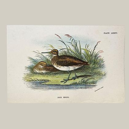 Jack Snipe, Small Plate Print -1893