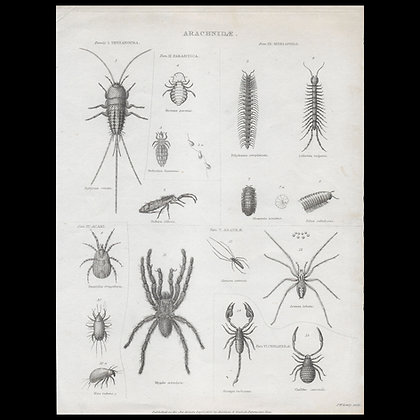 Various Insects - Circa 1820