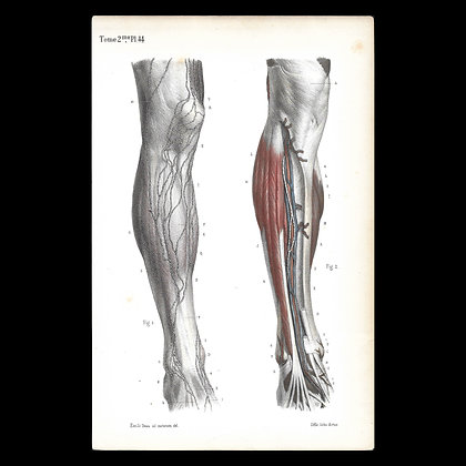 Plate 44 -Lymph Nodes of the Knee and Shin. Original 1847 Print.