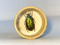 bug 3.jpg