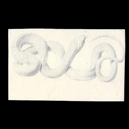 Original Pencil Drawing of a Snake