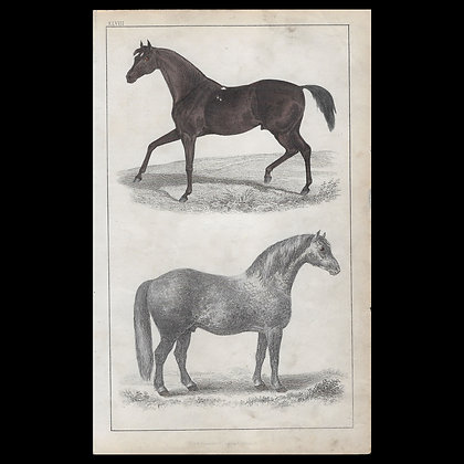 Horses - 1858 Hand Watercoloured Print
