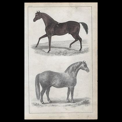 Horses - 1858 Hand Watercoloured Print