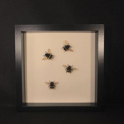 Bumble Bee Display Frame