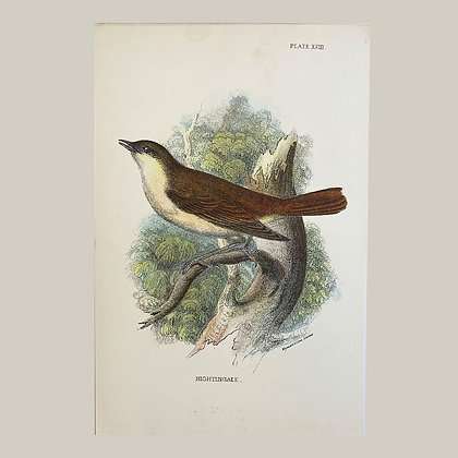 Nightingale, Small Plate Print -1893