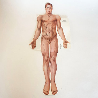 CLEARANCE - Print of Asexual Anatomical Figure