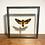 Thumbnail: Deaths Head Hawk Moth - Double Sided Glass Frame