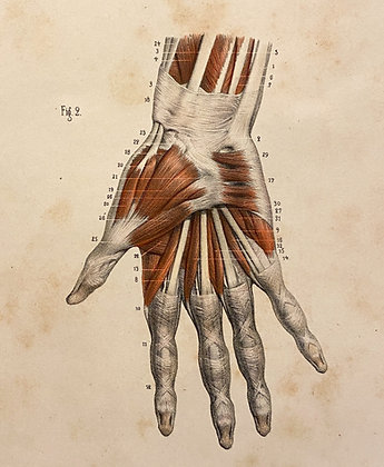 Tendons of the Palm - Original Mounted 1847 Print