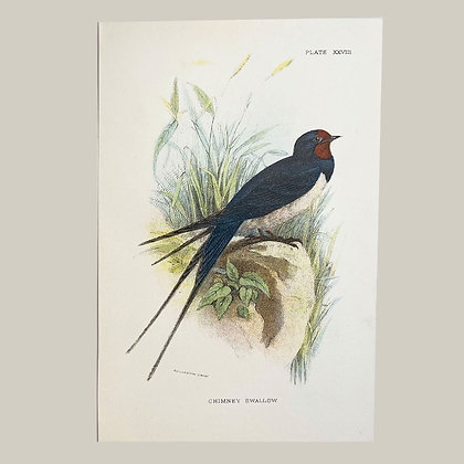 Chimmney Swallow, Small Plate Print -1893