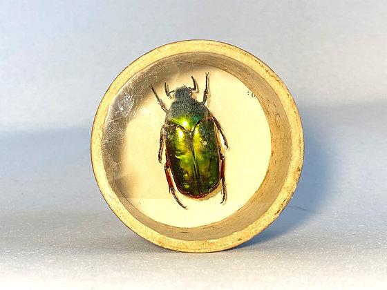 Emerald Scarab Beetle - Bug Pot