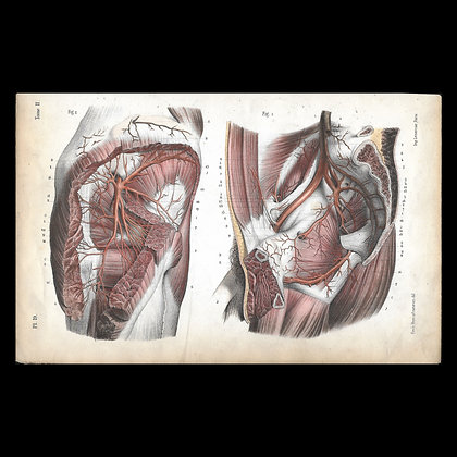 Plate 19 - Arteries of the Thigh. Original 1847 Print.