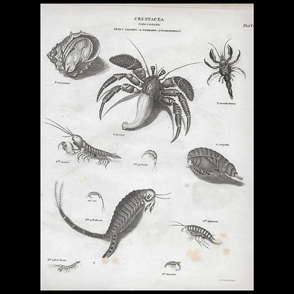 Various Crustacea - Circa 1820