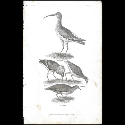 Curlew etc - Copper Plate Engraving