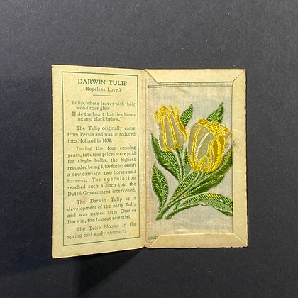 Darwin Tulip - Silk Embroidery 1933 Cigarette Card