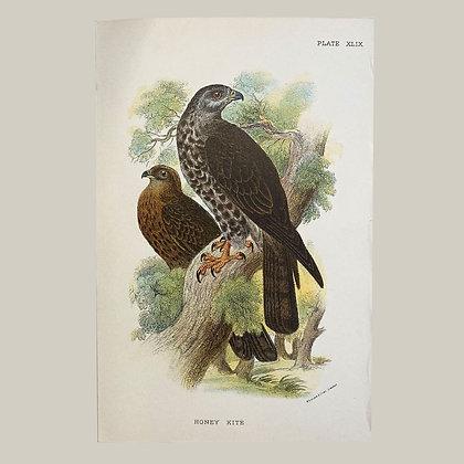 Honey Kite, Small Plate Print -1893