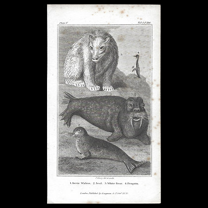 Arctic Walrus, Seal, White Bear and Penguin - Plate 1820