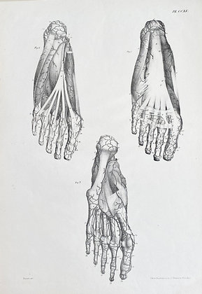 Large Lithograph of the Feet Circa 1840