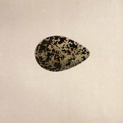 Grey Plover, Egg Print Circa 1890