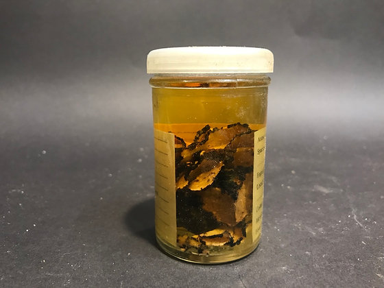 Wet Specimen Summer Truffle (UK SHIPPING ONLY)