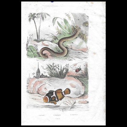 Snake and Fish - 1829 Hand Coloured Print