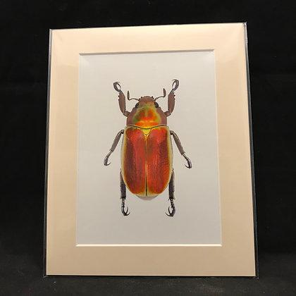 Chrysina aurigans -Real Macro Photograph of Insect #2