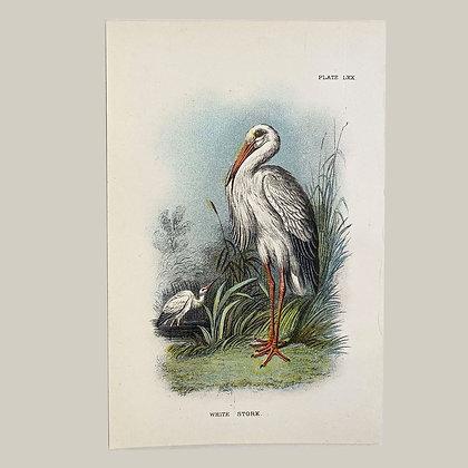 White Stork, Small Plate Print -1893
