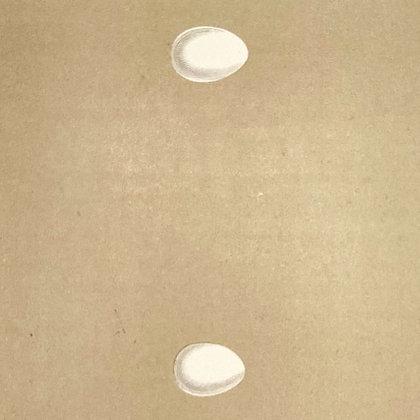 Martin and Sand Martin, Egg Print Circa 1890