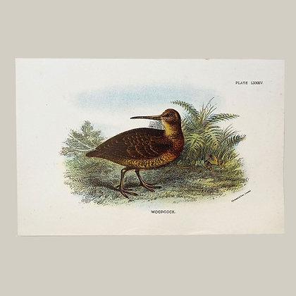 Woodcock, Small Plate Print -1893