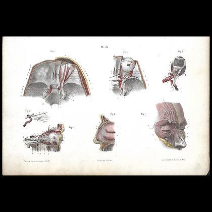 Plate 27 - Upper Maxillary Nerves. Original 1866 Print.
