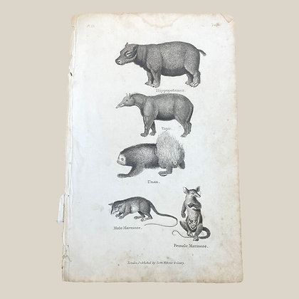 Hippo, Tapir, Unan, Male Marmose and Female Marmose - Plate Print 1820