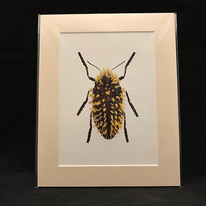 Julodis viridpes Real Macro Photograph of Insect #9