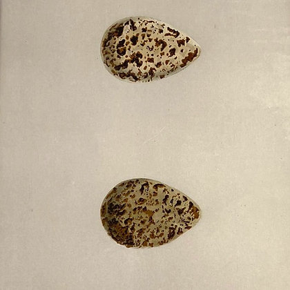 Ruff, Egg Print Circa 1890