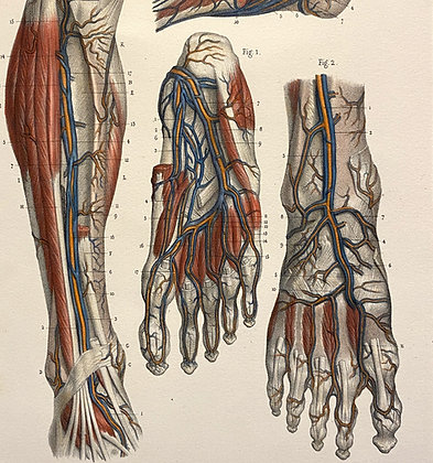Arteries of the Foot - Original Mounted 1847 Print
