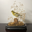 Thumbnail: Victorian Domed Finch