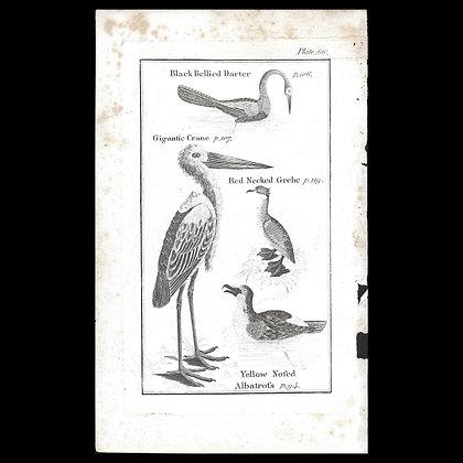 Gigantic Crane - 1792 Copper Plate Engraving P66
