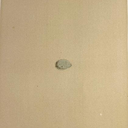 Serin Finch, Egg Print Circa 1890