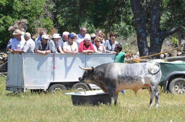Ganaderia Guzman  Ruta del toro