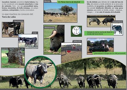 Visita Ganadería Toros Madrid, visita ganadería Madrid, rutas del toro comunidad de Madrid, Madrid turismo, conoce ganadería brava, visitar ganadería de toros, visita guiada  Madrid, ver toros en el campo Madrid, ganadería cerca de Madrid, donde vista una ganadería en Madrid, ver toros en el campo