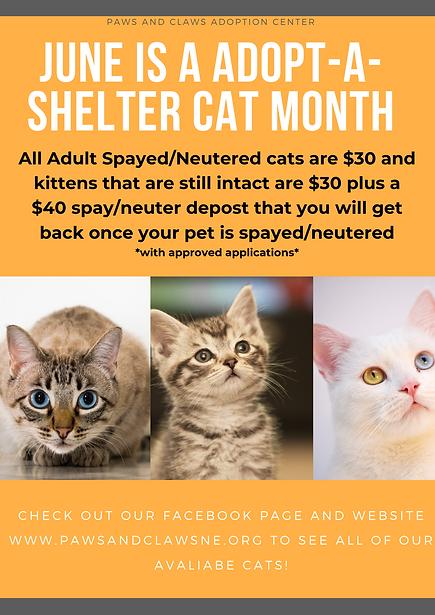 Orange Photo Pet Adoption Poster.png