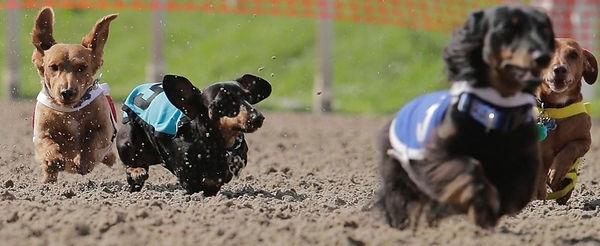 weinerdograces(1).jpg