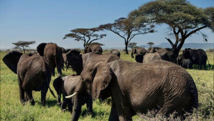 Serengeti 0005.jpg
