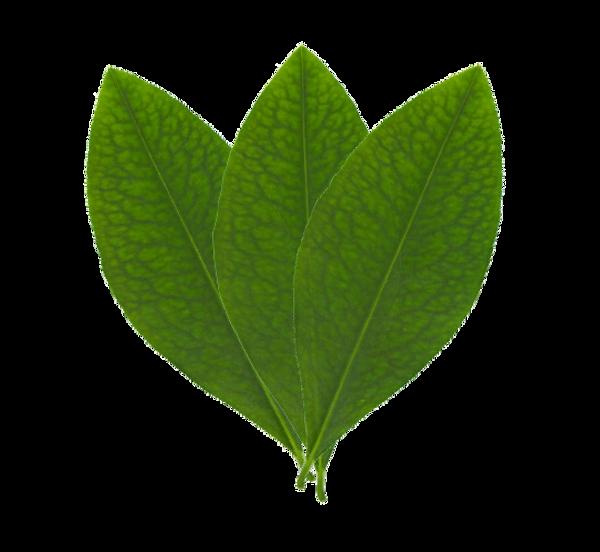 Koka Leaf logo_APP.png