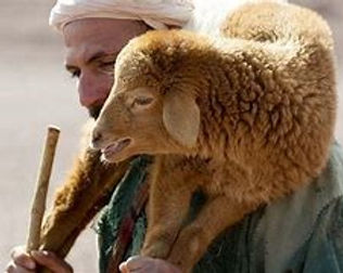 25-4-lamb.jpg