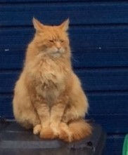 15-11-cat.jpg