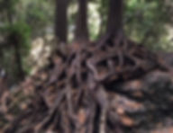 2-8-roots.jpg
