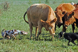 Wesson gathering pairs